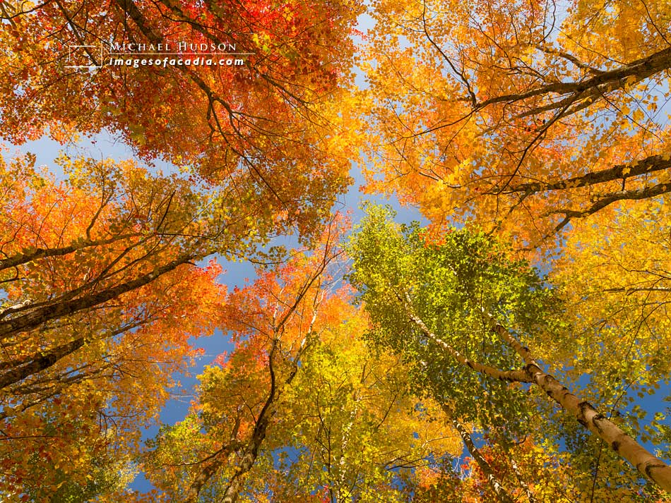 Colorful autumn trees along the Jesup Path, Acadia National Park
