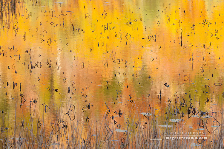 Autumn Abstract, The Tarn, 2013