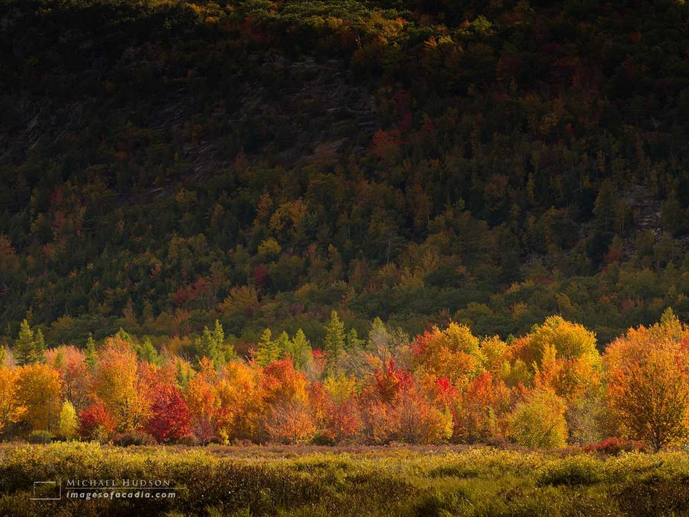 Autumn foliage at the Great Meadow, Acadia National Park, Maine,