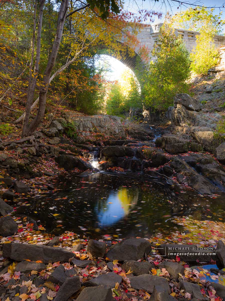Autumn foliage, Duck Brook, Acadia National Park, Maine, USA