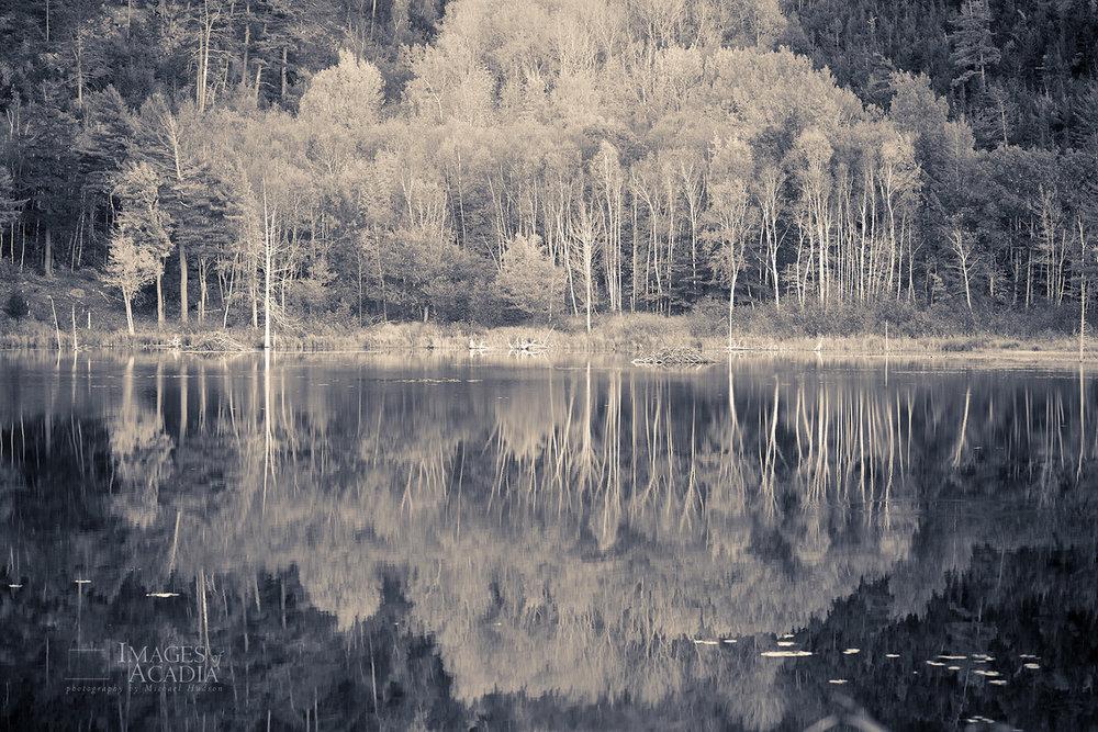 Beaver Dam Pond at dusk