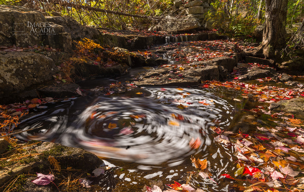 Swirling leaves at Duck Brook