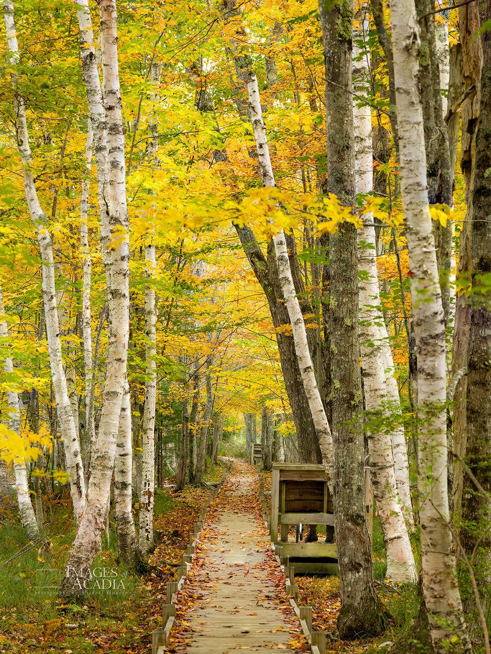 Autumn along the Jesup Path