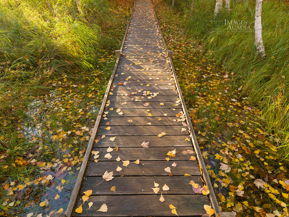The Jesup Path