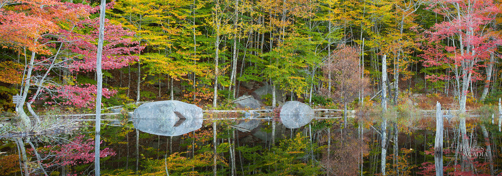 Small Pond on the Canon Brook Trail