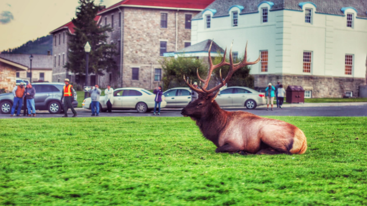 The village is full of Deers. Remember to respect them and their habitat.