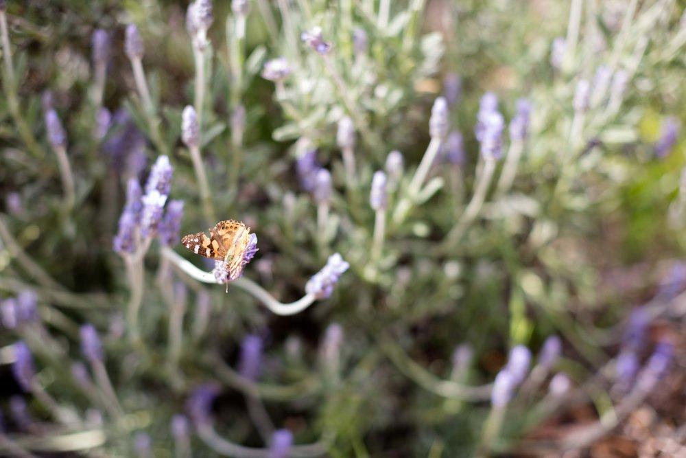 Flower picking-15.jpg