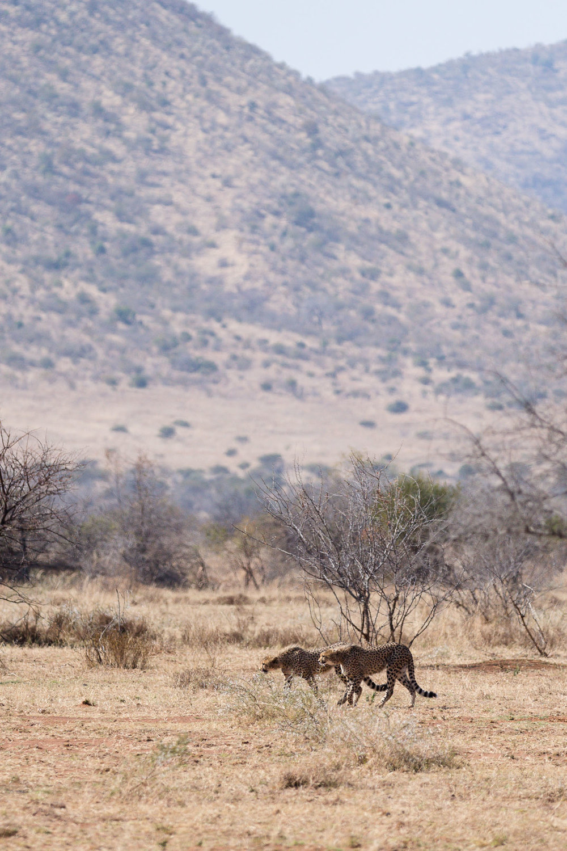 Africa Pilanesberg-15.jpg