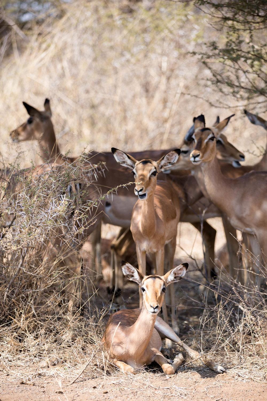 Africa Pilanesberg-17.jpg