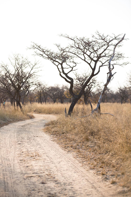 Africa Matamba-39.jpg