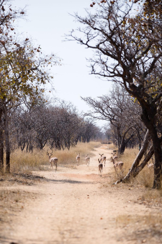 Africa Matamba-82.jpg