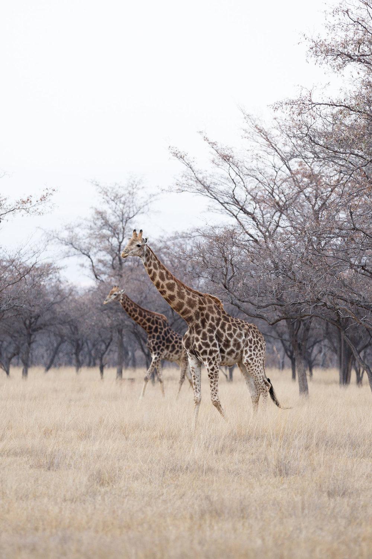 Africa Matamba-84.jpg