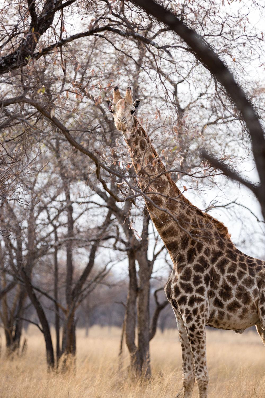 Africa Matamba-87.jpg