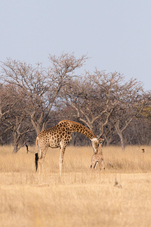 Africa Matamba-93.jpg