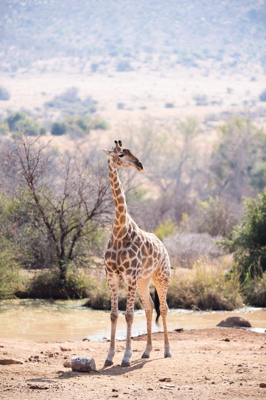 Africa Pilanesberg-18.jpg