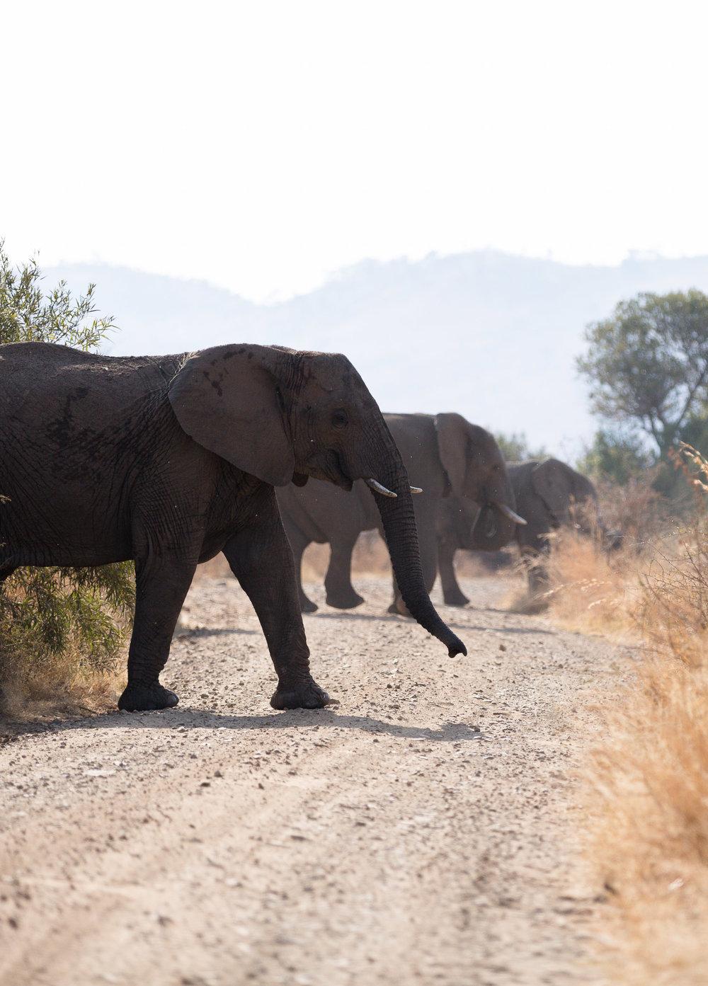 Africa Pilanesberg-23.jpg