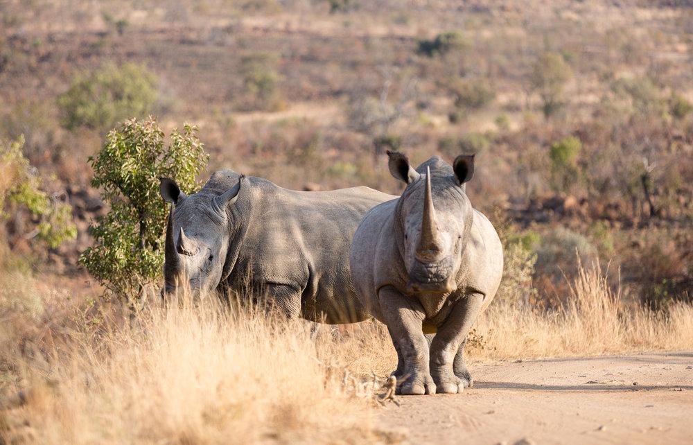 Africa Pilanesberg-25.jpg