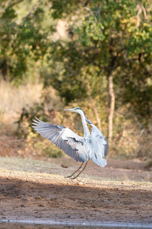 Africa Pilanesberg-26.jpg