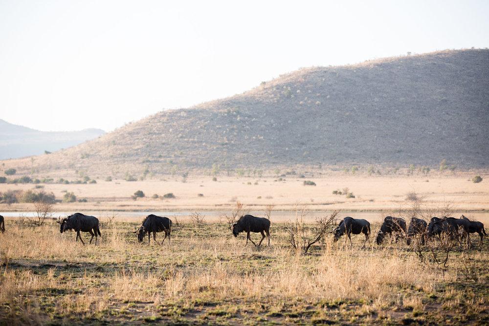 Africa Pilanesberg-28.jpg