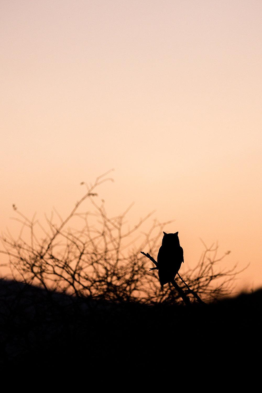 Africa Pilanesberg-31.jpg