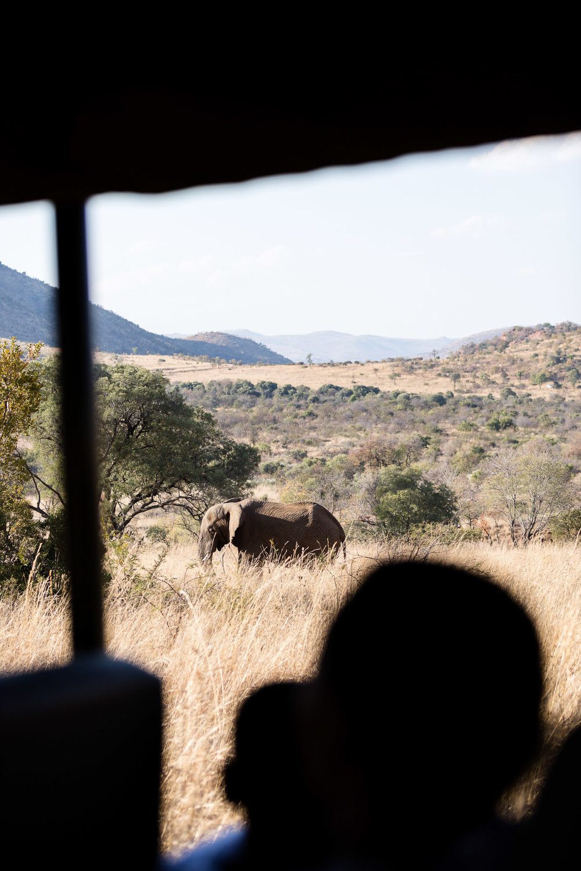 Africa Pilanesberg-41.jpg