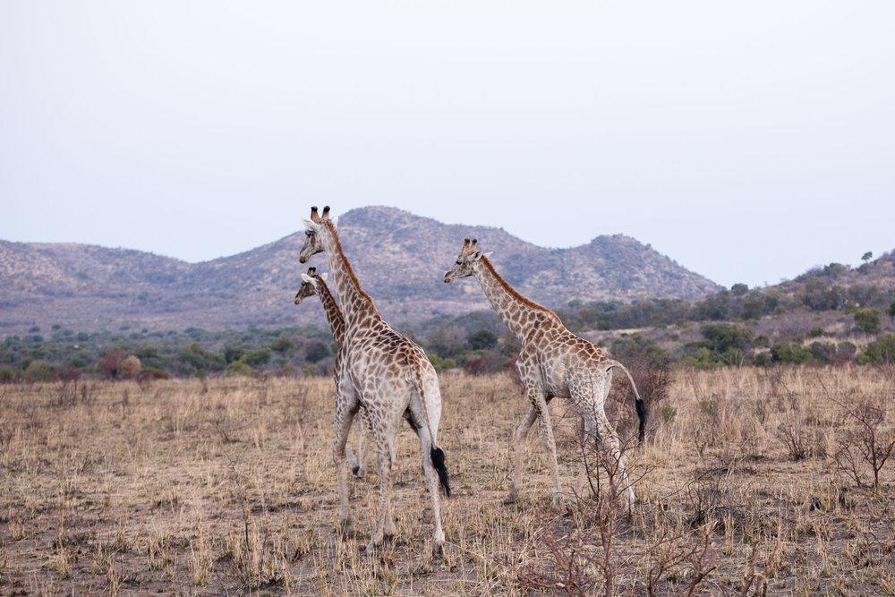 Africa Pilanesberg-53.jpg