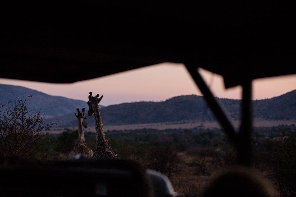 Africa Pilanesberg-57.jpg