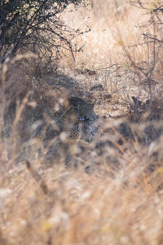 Africa Pilanesberg-63.jpg