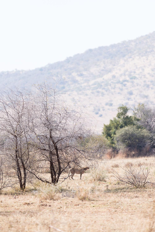 Africa Pilanesberg-76.jpg