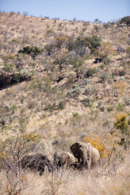 Africa Pilanesberg-90.jpg