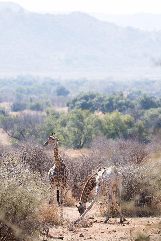 Africa Pilanesberg-95.jpg