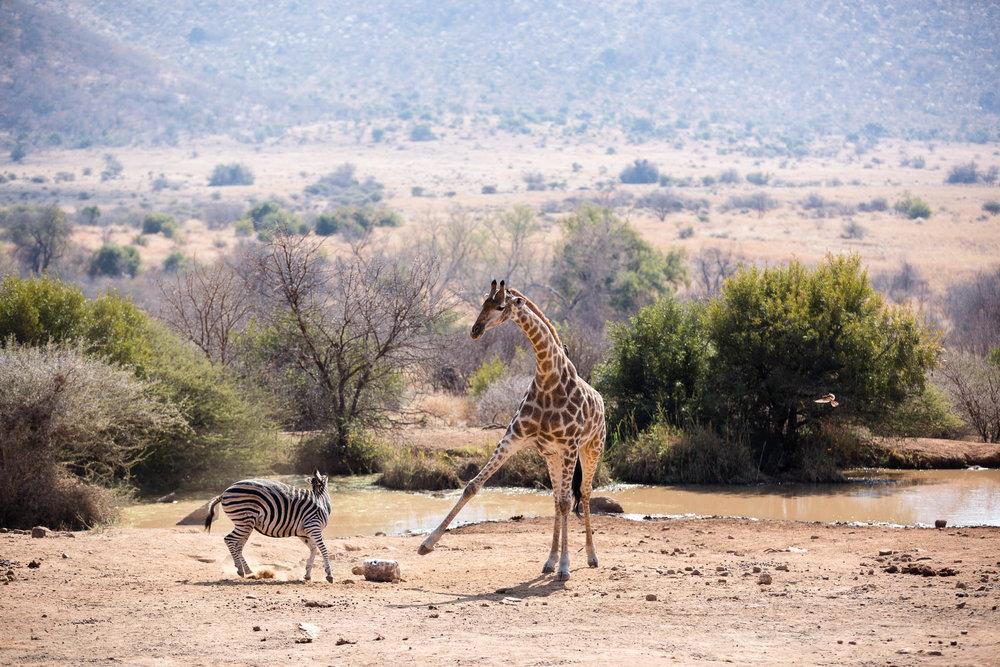 Africa Pilanesberg-97.jpg
