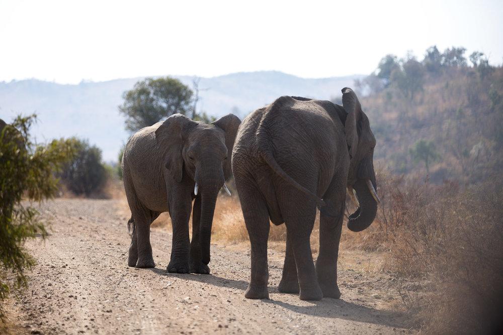 Africa Pilanesberg-105.jpg