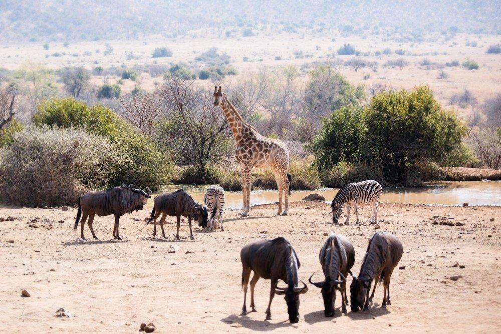 Africa Pilanesberg-102.jpg