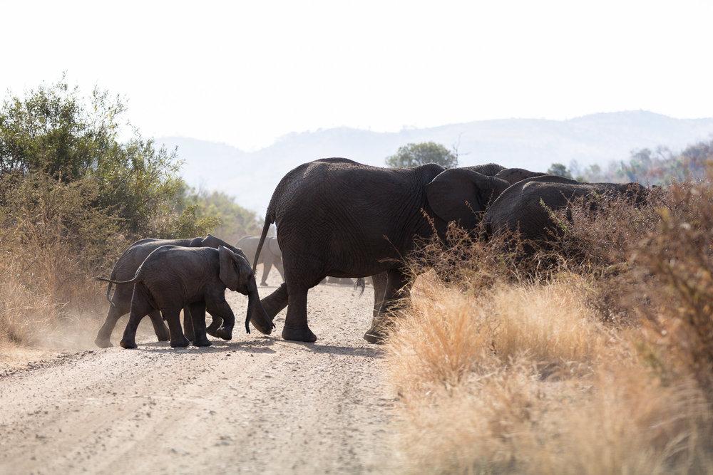 Africa Pilanesberg-117.jpg