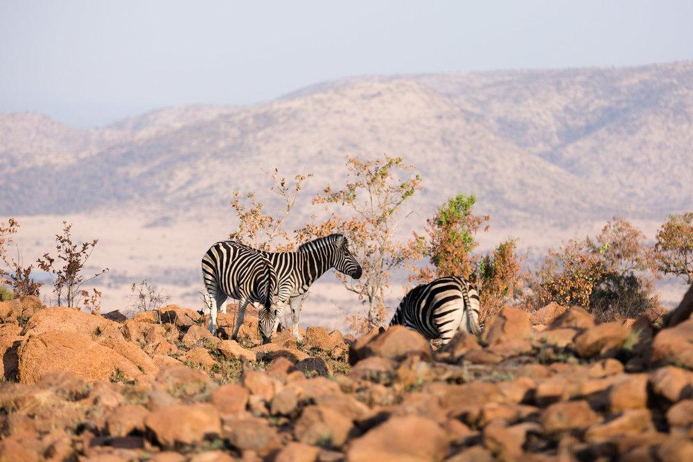 Africa Pilanesberg-144.jpg