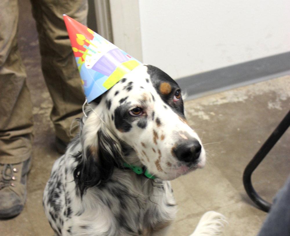 Birthday Watson.JPG