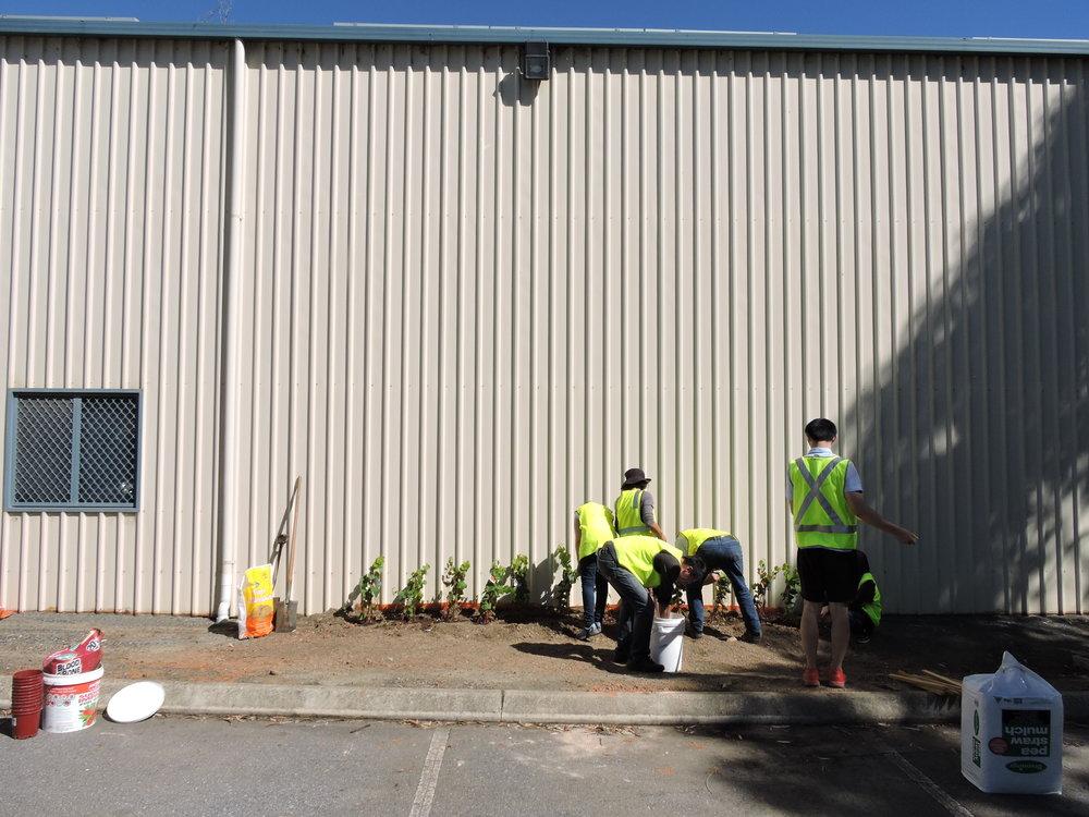 20160321_JQF04_urban planting (66).JPG