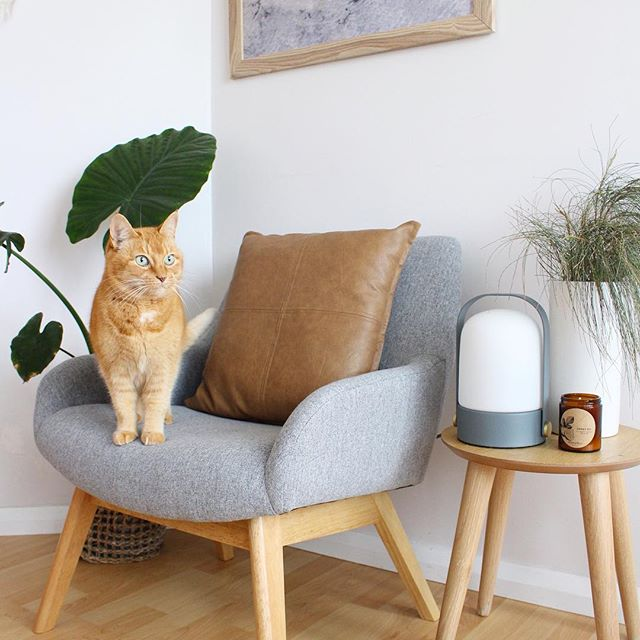 Happy Friday little kitty 🦁Another beautifully styled shot by the wonderful @thediydecorator 🌿💚