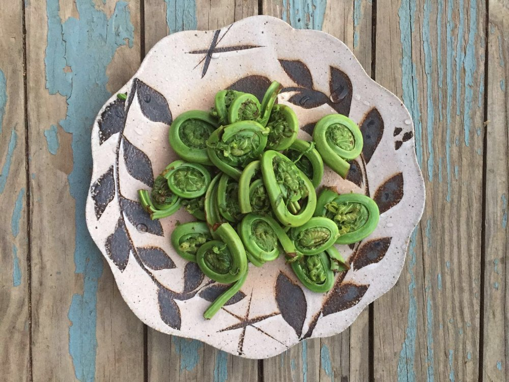 Fresh fiddleheads chez Ali in Vermont