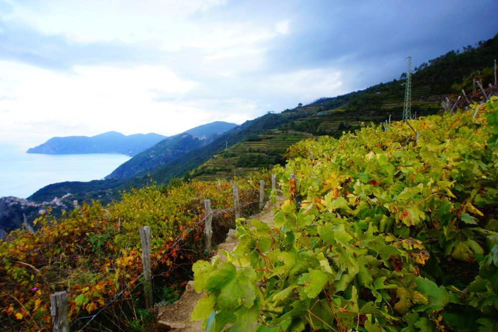 Vineyards. The region is known for white wines.