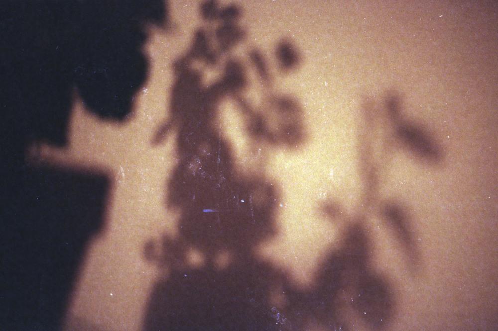 OlympusTrip35_KodakGold200_2015-09_021.jpg