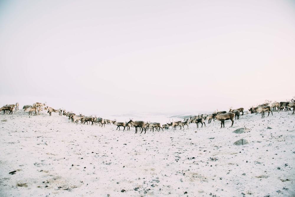 Lapland-Caro366.jpg