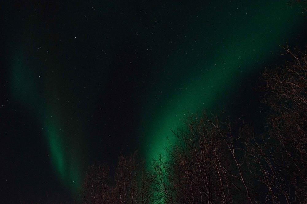 Lapland-Caro493.jpg