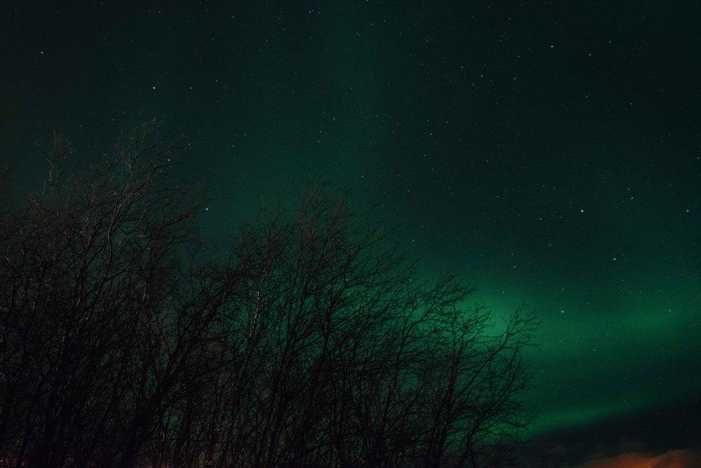 Lapland-Caro501.jpg