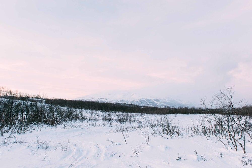 Lapland-Caro529.jpg