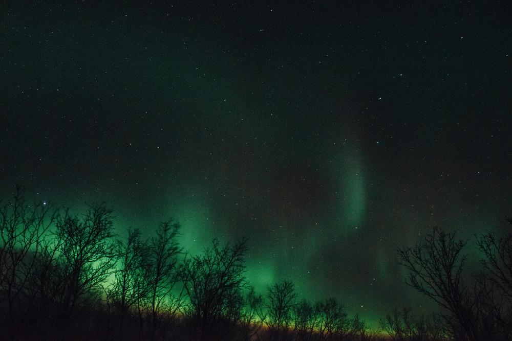 Lapland-Caro238.jpg