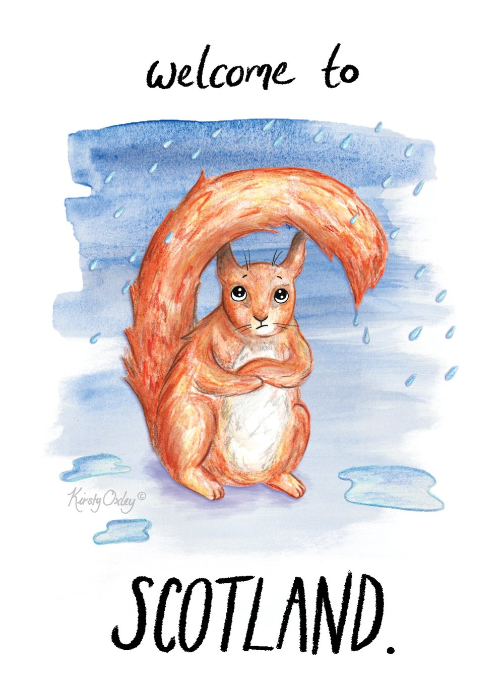 red_squirrell_kirsty_oxley_scotland_illustration_web.jpg