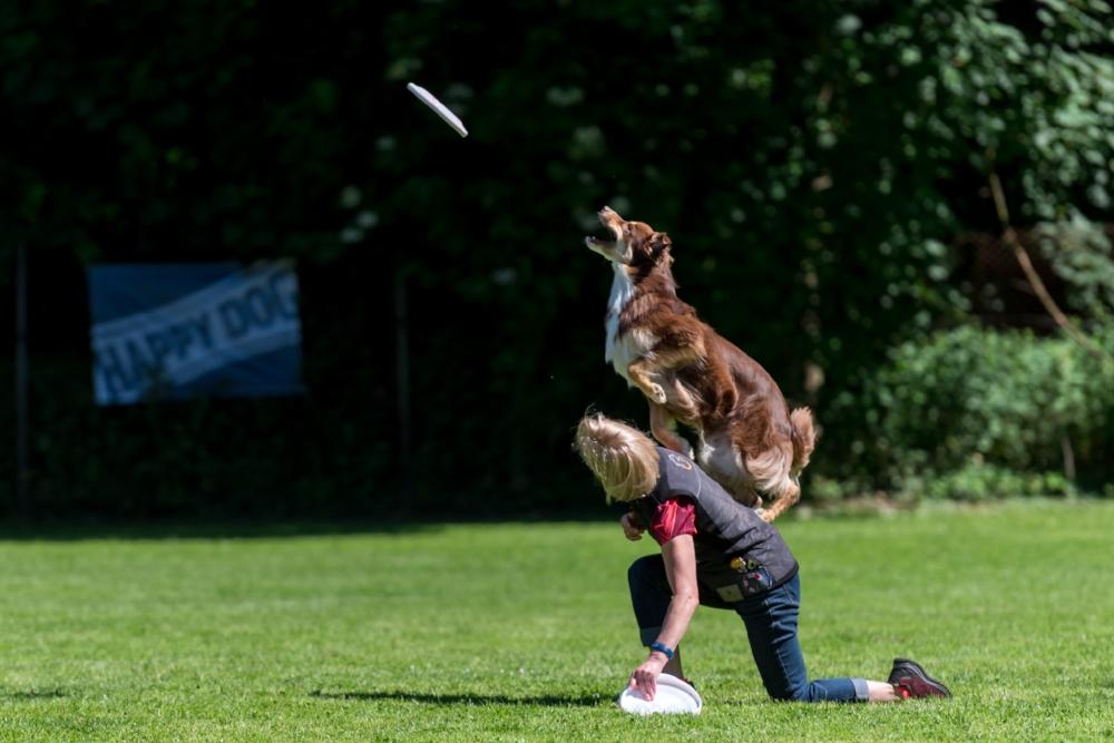 Dog-Frisbee Köln 2017