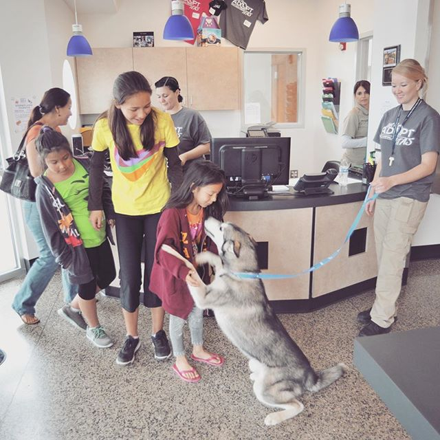 Tracy Animal Shelter - adoptions make everyone happy #tracy #animalshelter #animalshelterarchitecture #indigoarchitects